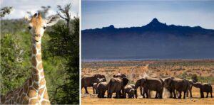Ol Pejeta Conservancy - Kenya